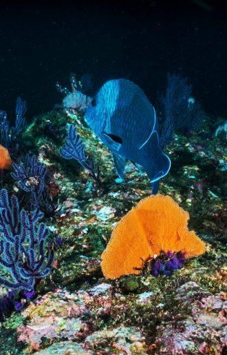 Colourful deep-sea coral