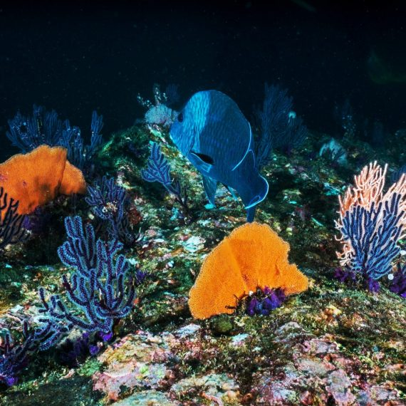 Colourful deep-sea coral