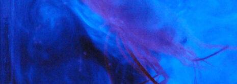 bioluminescence from a shrimp