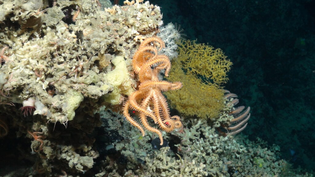 Feature deep-sea image for DOSI Round-Up featuring Mesobot