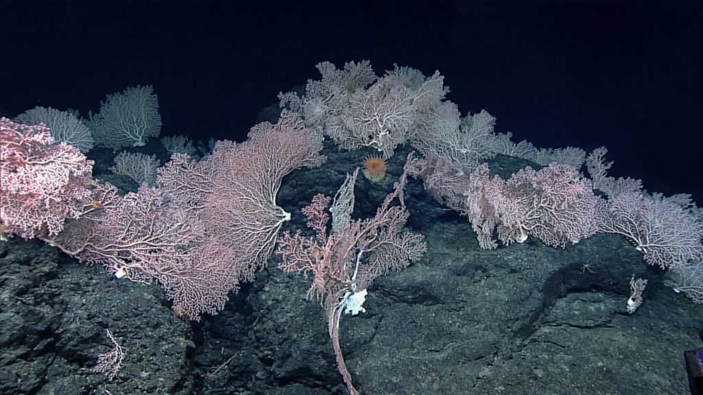 Seamount with cobalt crust, a possible target for deep-sea mining