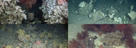 Images of deep-sea coral reef, hard-bottom sponge garden, a rare sea cucumber and hydroid habitat and a stony reef habitat. All in Norway.